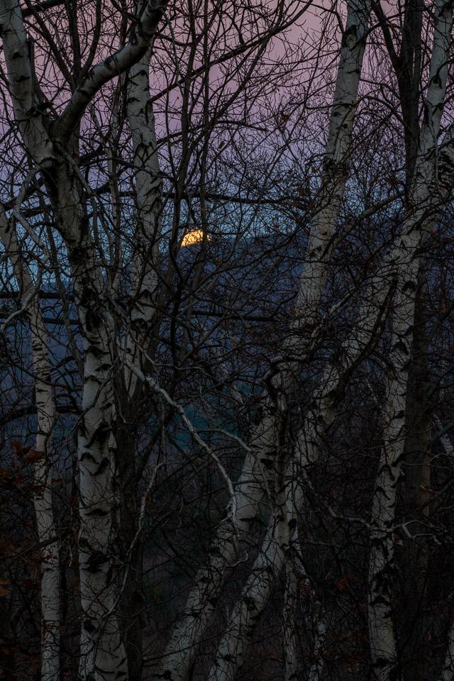 Moonrise, Twilight & Birches, Williamstown, MA