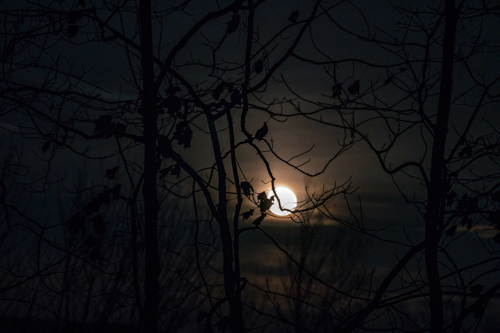 Silhouettes in Moonlight, Williamstown, MA