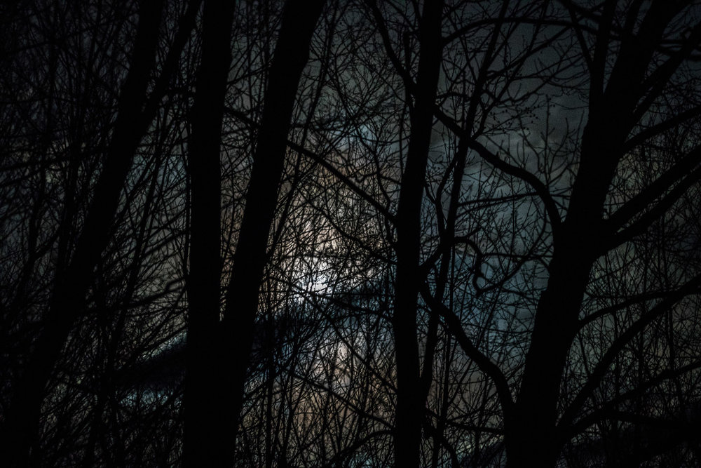 Moonlight through Trees with Backslash Cloud, Williamstown, MA