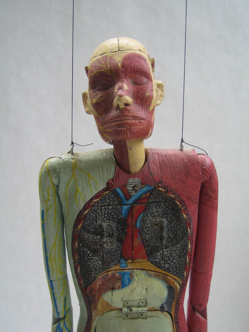 anatomy man8.JPG