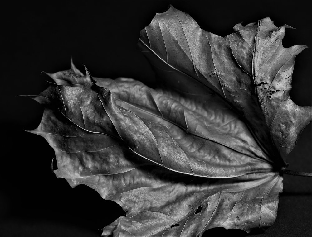 Dried Leaf.jpg