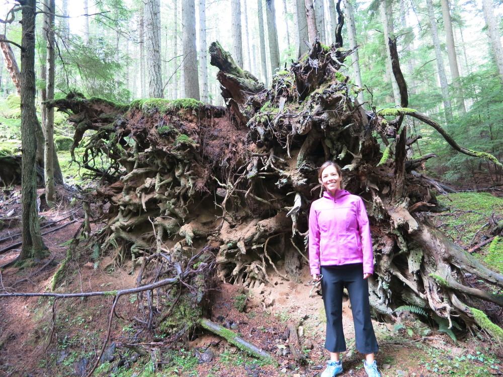 Big roots!