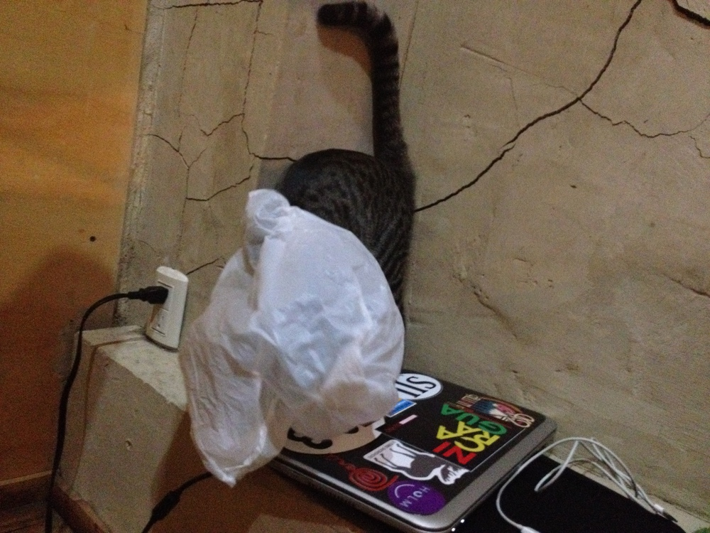 Kitty playing in a plastic bag