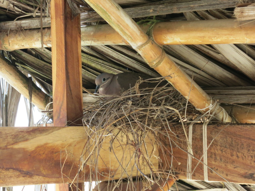 The bird in our cabana