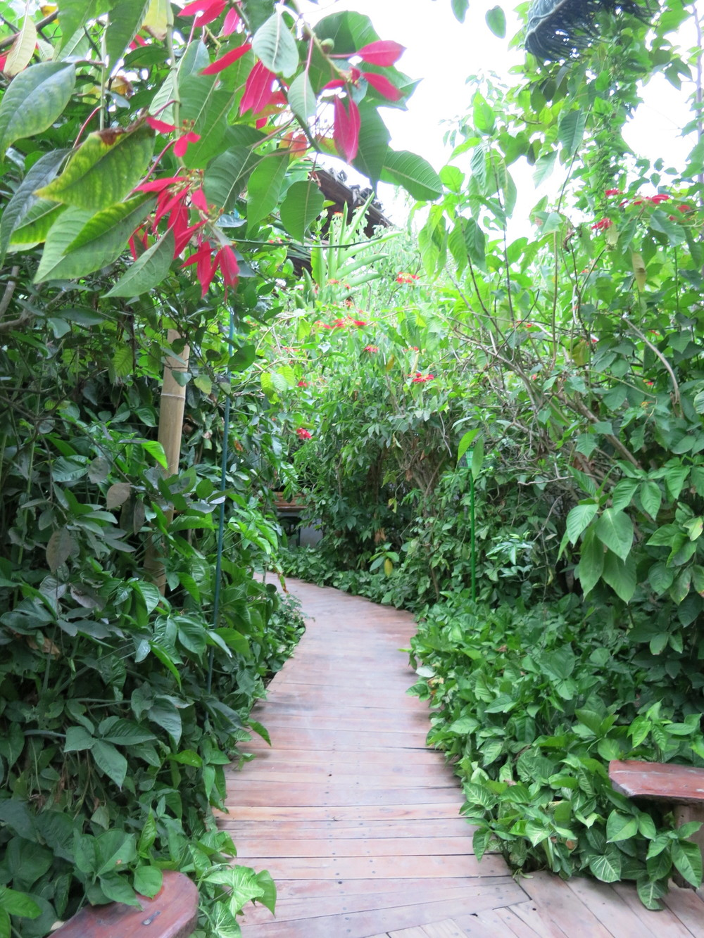Pathways around the hosteria