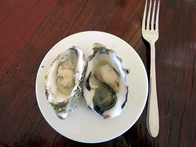 Oysters from Hugh