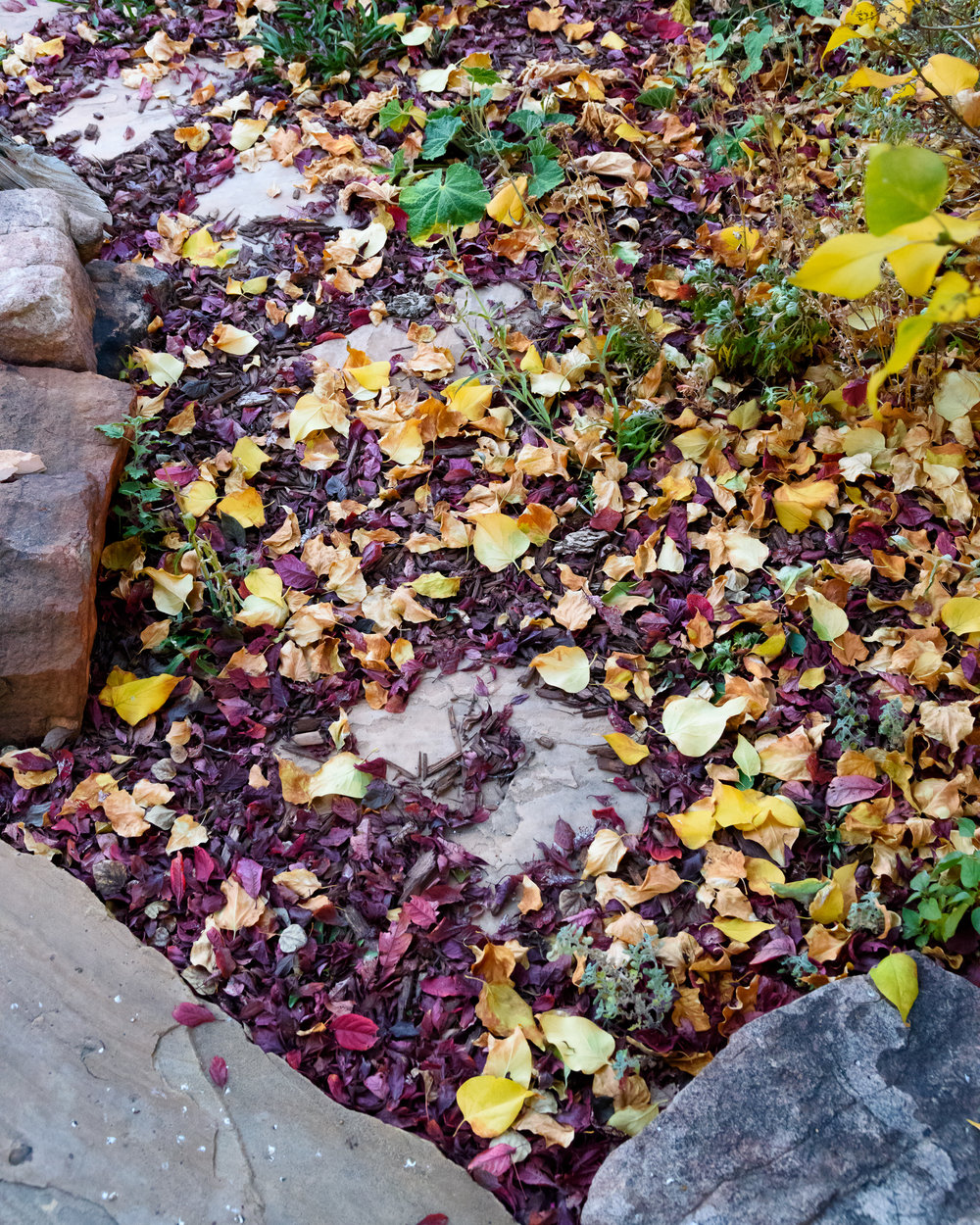 We don't get the majestic maples here in NM. So we content ourselves with plum and lilac leaves. We get to brush our feet through a walkway about 4' long. If you walk back and forth, eyes closed, you can pretend you're back East under the towering maples ...