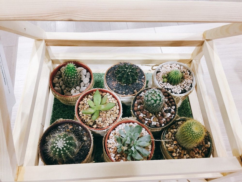 Cute + affordable way to show off your cactus babies!♡