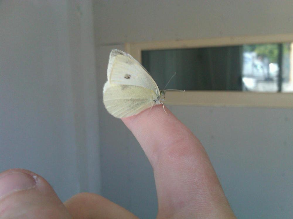 Mothra Mothra