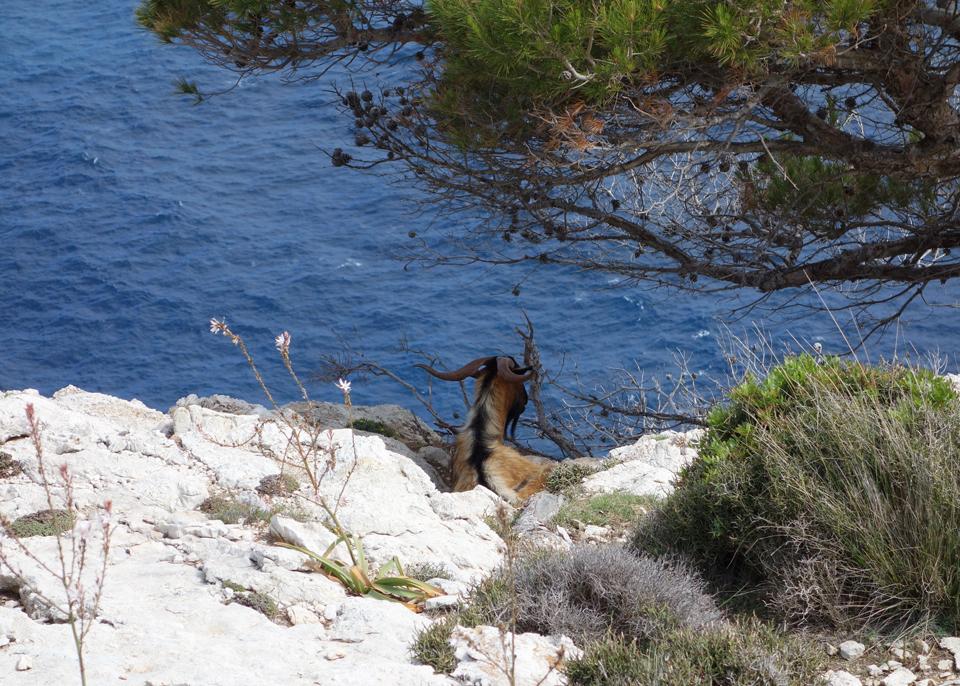Mallorca-25.jpg