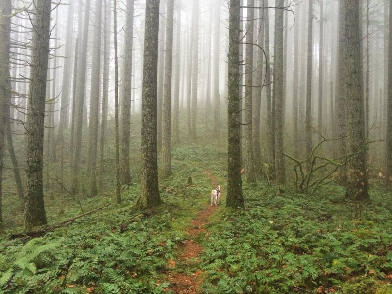 Hike20.jpg