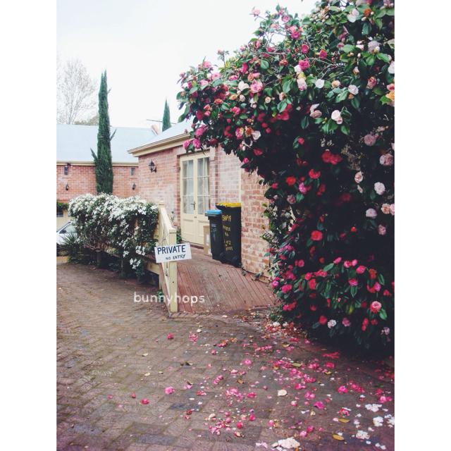 flowers hahn