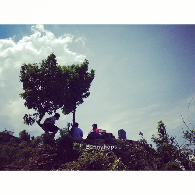 rani tree
