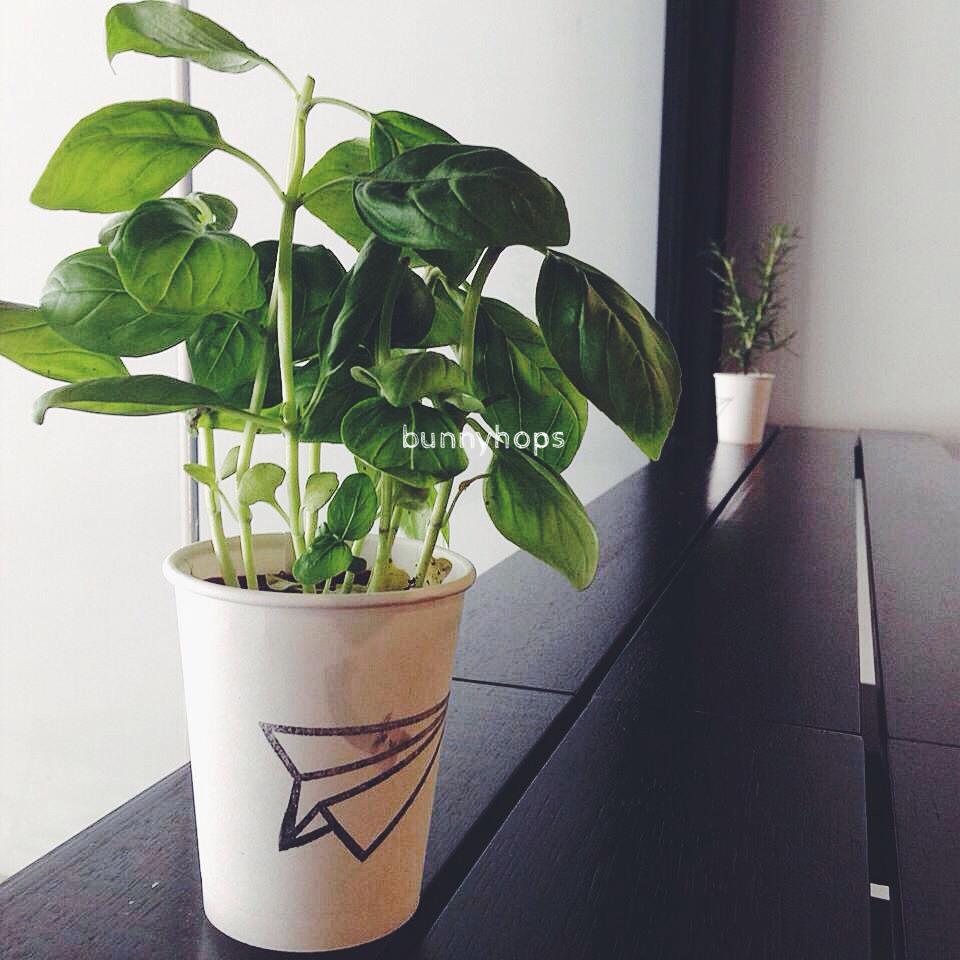 wanderlust plants