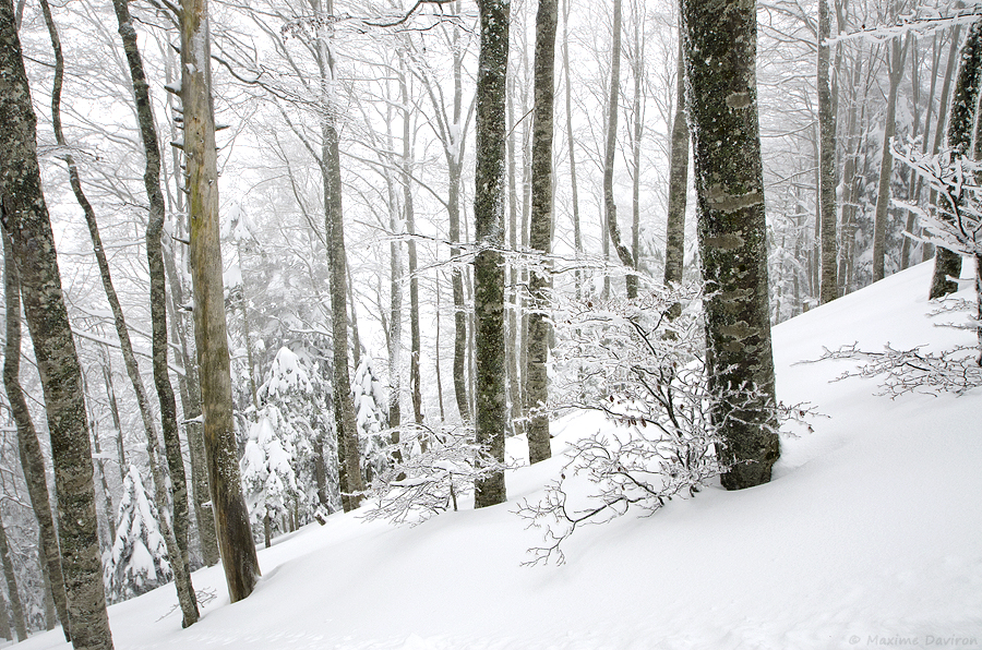 neige 076.jpg