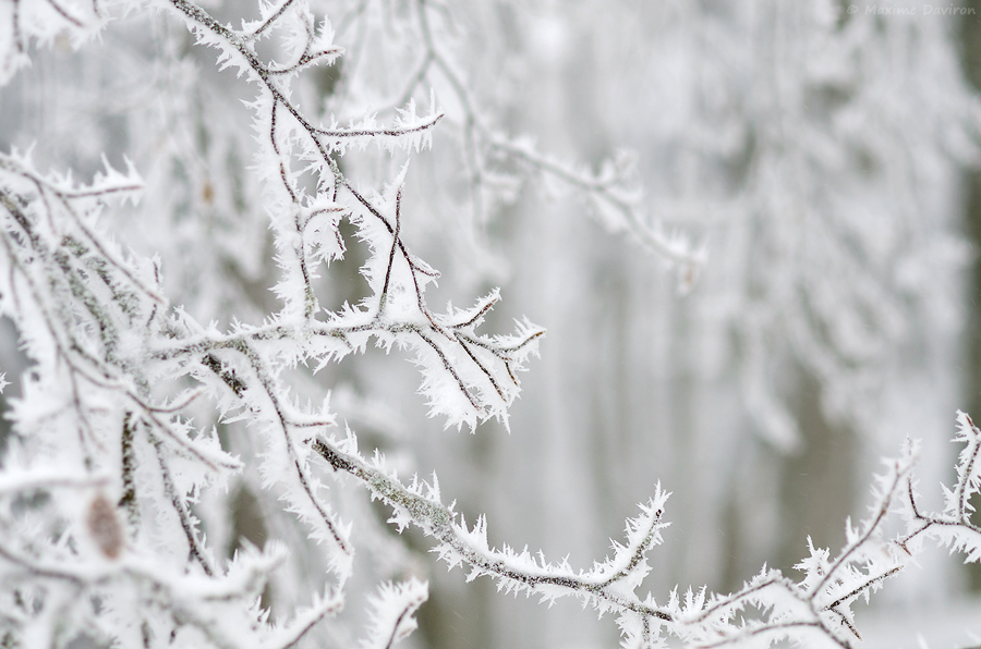 neige 183.jpg