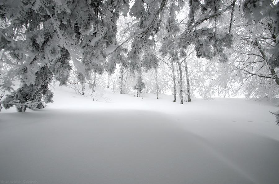 neige 202.jpg