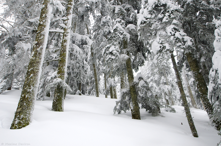 neige 210.jpg