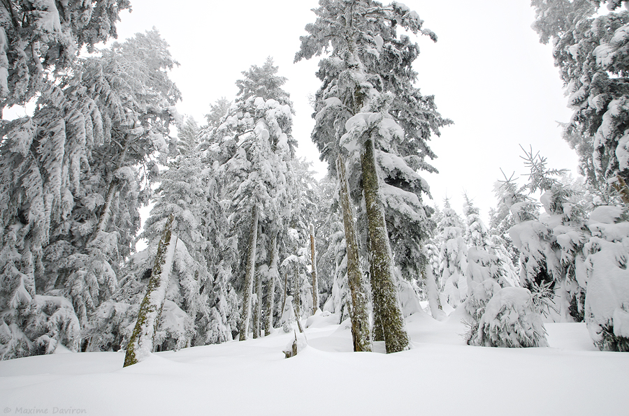 neige 224.jpg