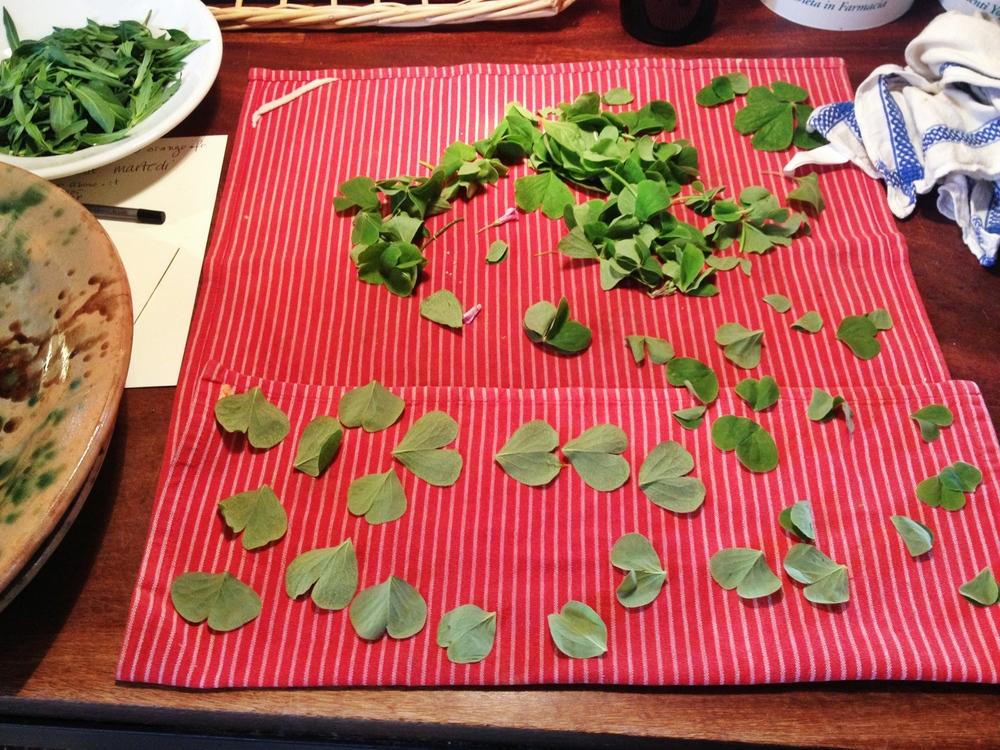 san_martino_herbs.jpg