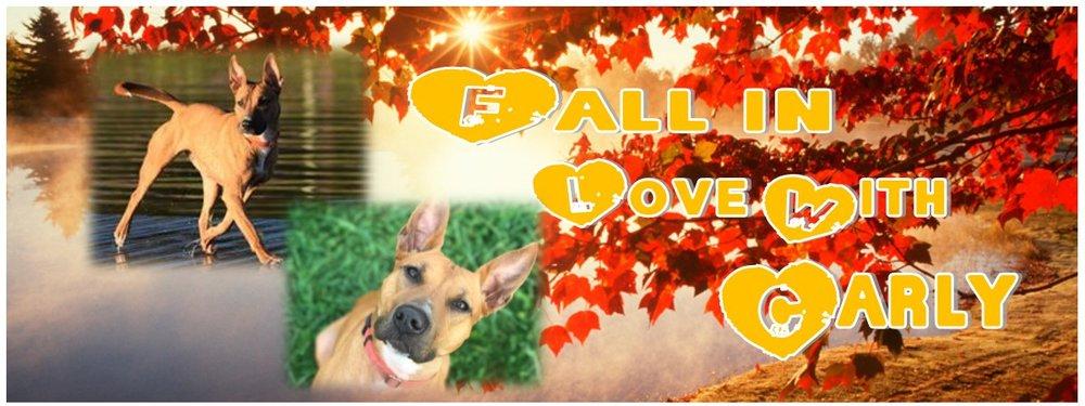 carly fall.jpg
