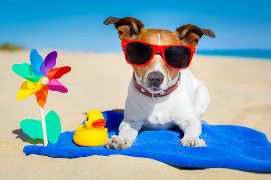 dog-summer.jpg