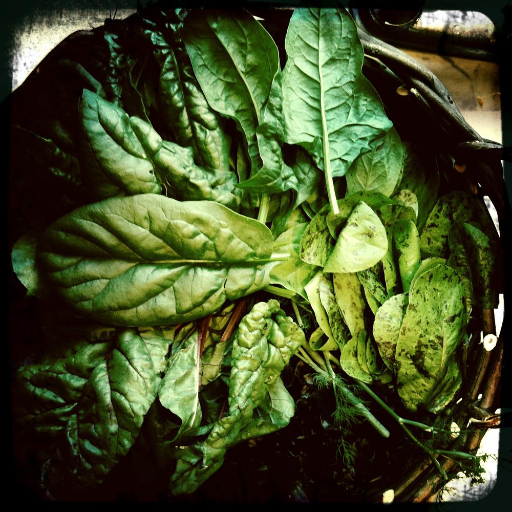 basket of lettuce.jpg