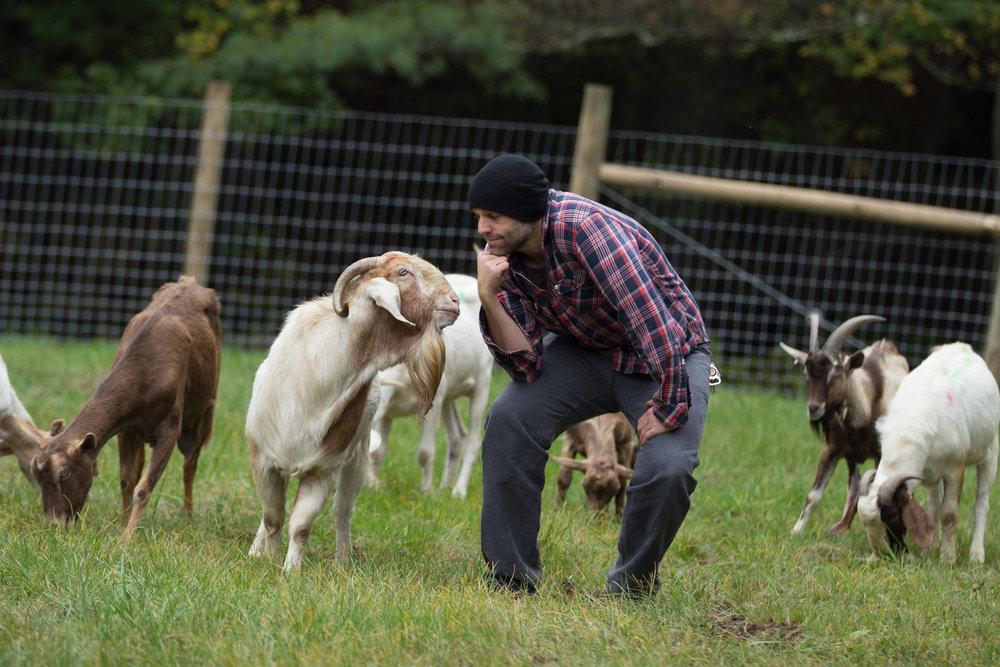 Sponsor a goat!