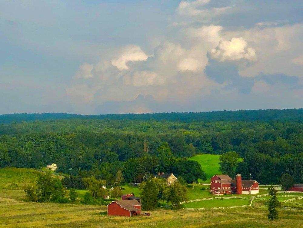 Our new 336-acre farmland and the future of Tamerlaine Sanctuary