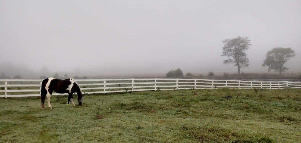 apache in the field.jpg