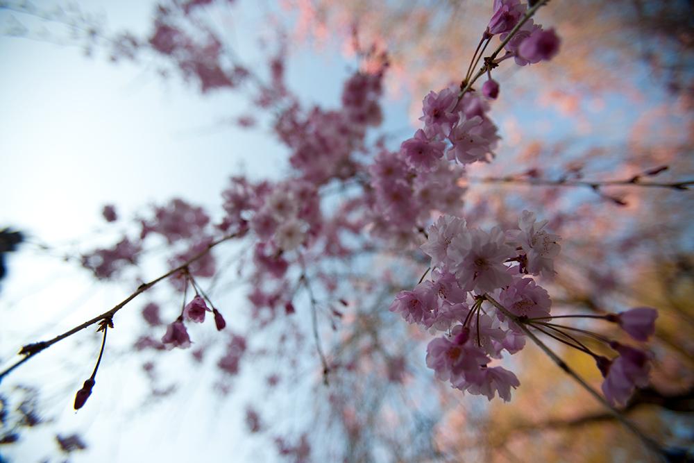 kyoto_4-9-06-455.jpg