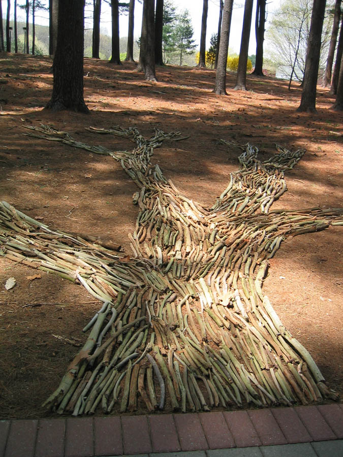 treeshadow1a.jpg