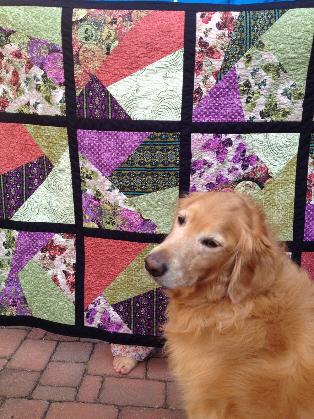 "Requisite ""Quilts n' Dogs"" shot. He's looking quite regal. A bit full of himself because he was recently groomed. (Read: ""Defurminated."")"