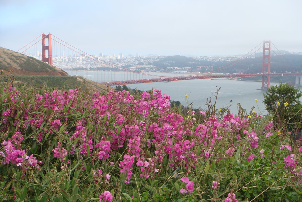 Wildflowers grace the Marin Headlands portion of the walk.