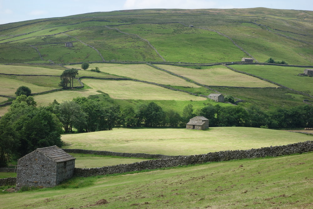 The Swaledale is the picturesque center of the Yorkshire Dales National Park, with its extensive system of small field barns.