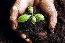 Biochar (Soil 2).jpg