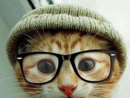 CatLime.jpg