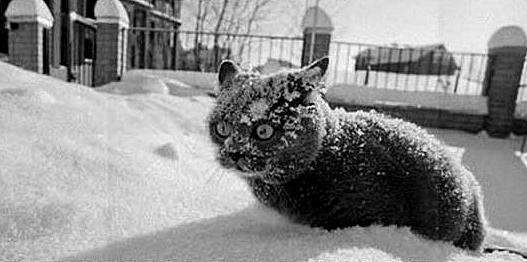 """Catnip, So much catnip.."""