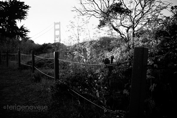 Fine Art Photography (san francisco)