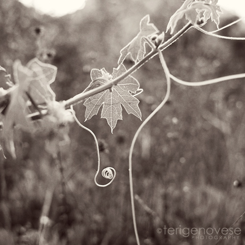 fine art nature photographby teri genovese