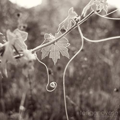 fine art nature photographby teri genovese