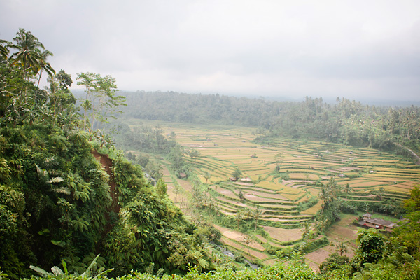 Bali Countryside & Rice Fields