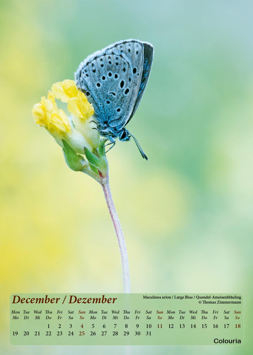 Dauth2_Schmetterlinge_2016_korrigiert_mod-13.jpg