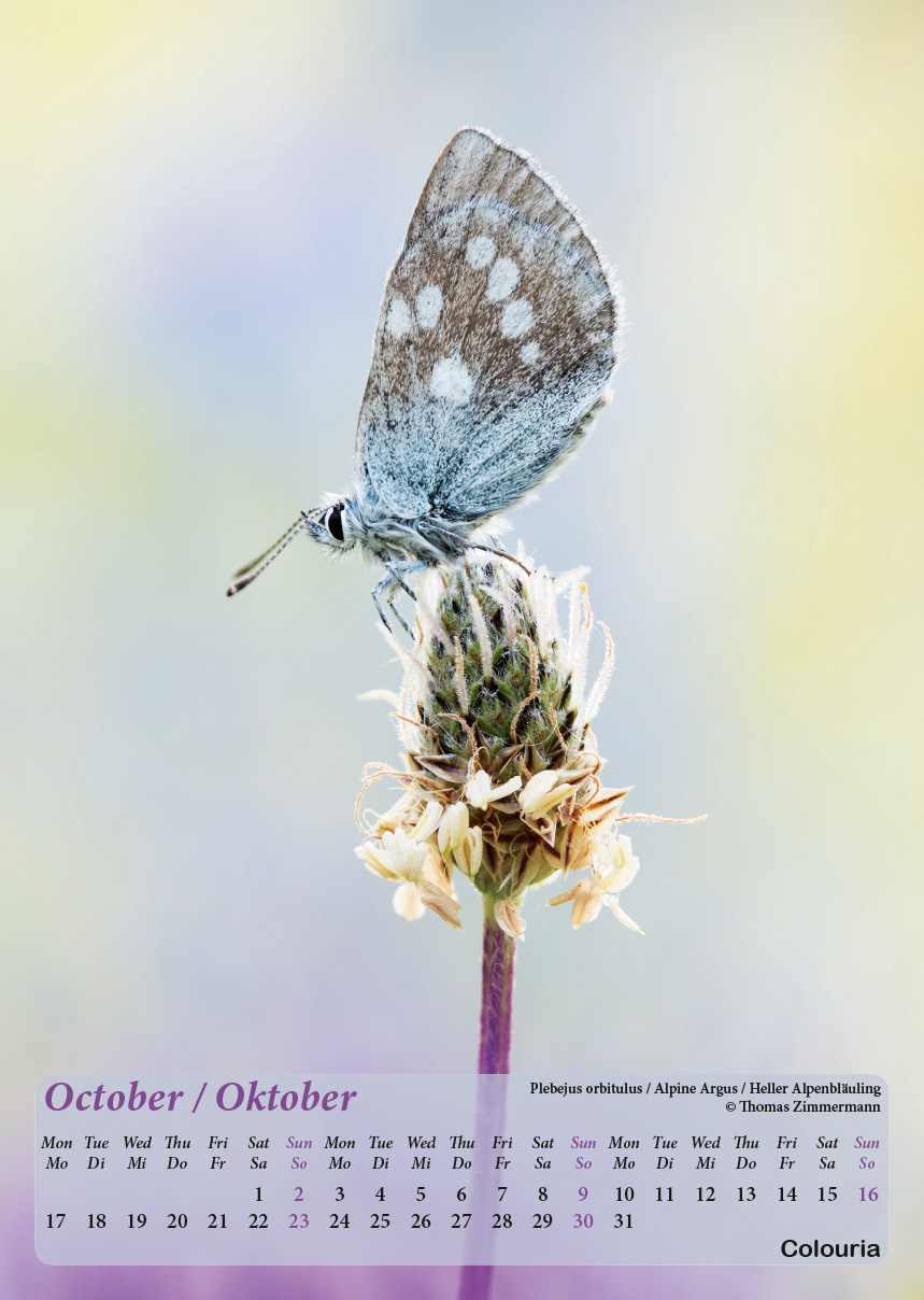 Dauth2_Schmetterlinge_2016_korrigiert_mod-11.jpg