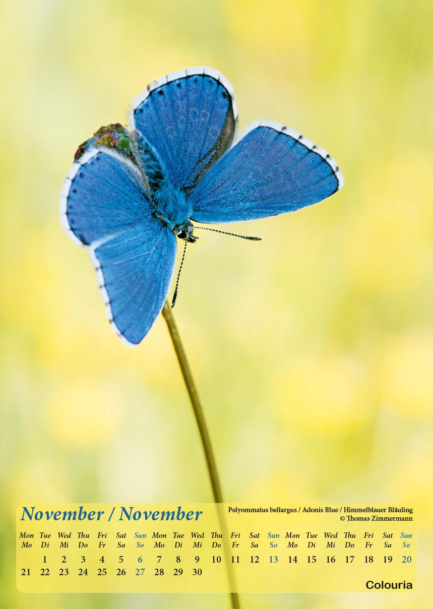 Dauth2_Schmetterlinge_2016_korrigiert_mod-12.jpg