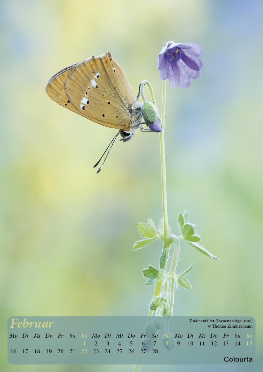 Dauth_Schmetterlinge_2015_korrigiert3.jpg