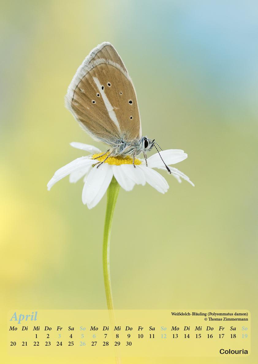 Dauth_Schmetterlinge_2015_korrigiert5.jpg