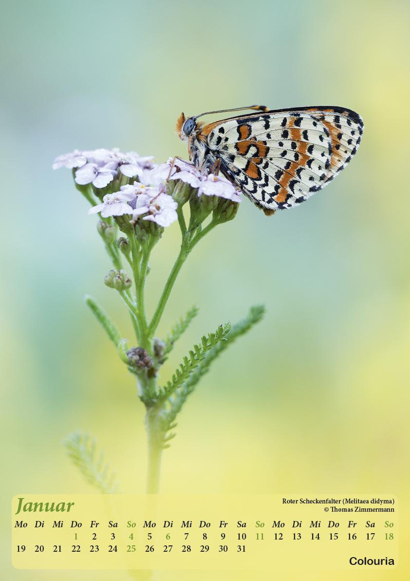 Dauth_Schmetterlinge_2015_korrigiert2.jpg