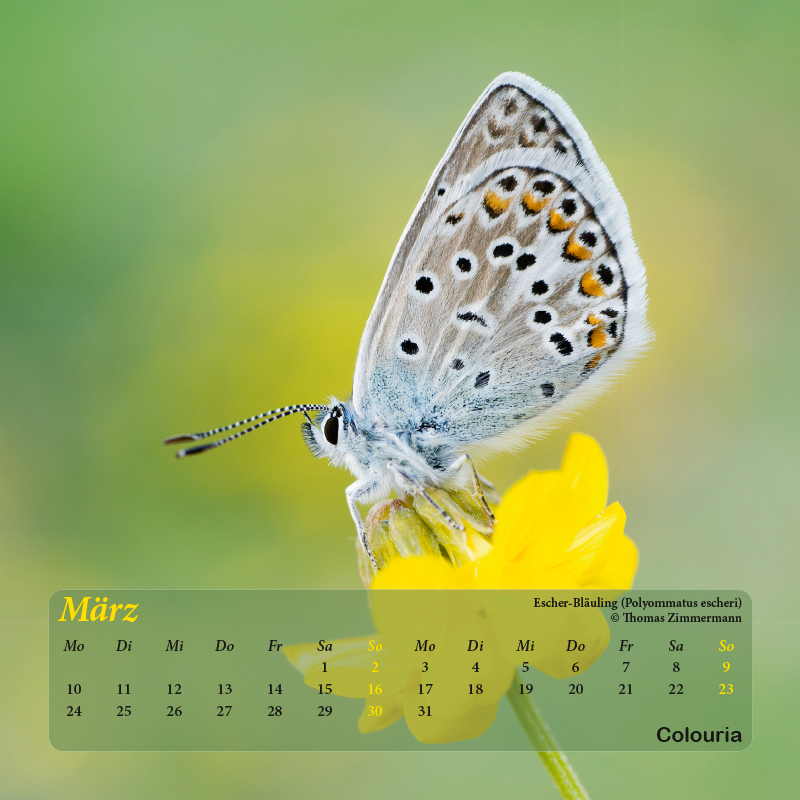 Falter_8102014-4.jpg