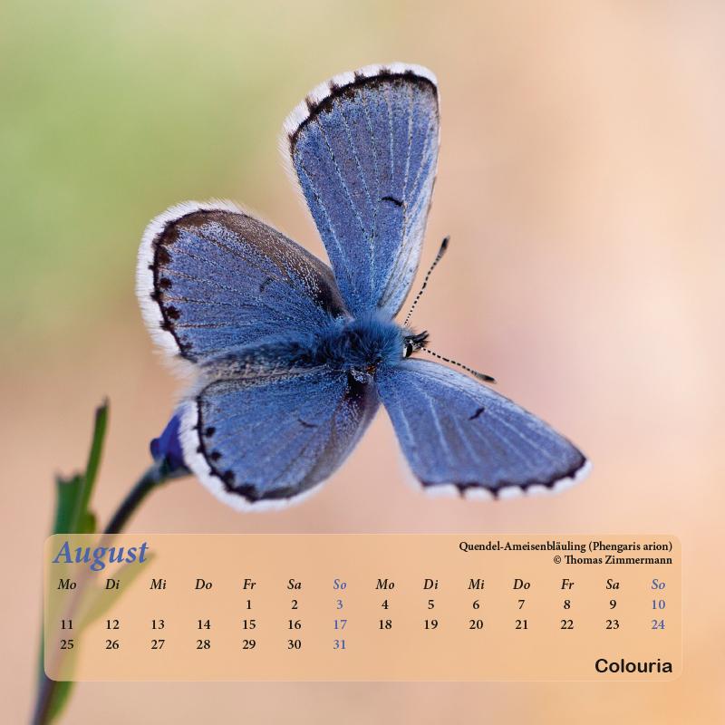 Falter_8102014-9.jpg